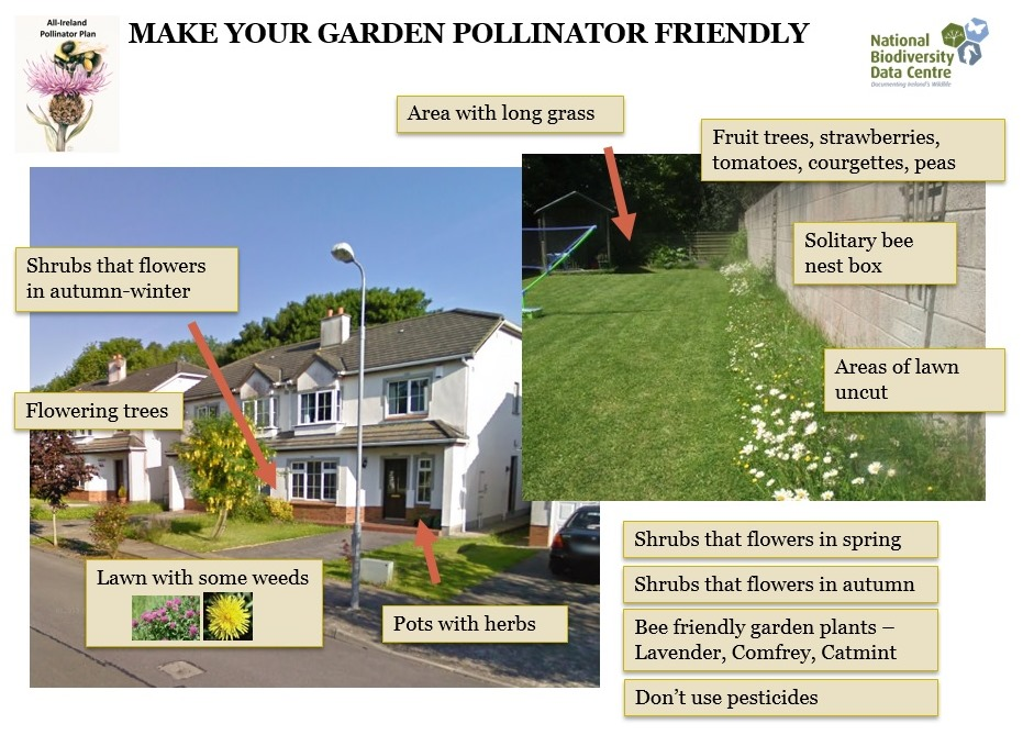 Actions-to-make-your-garden-or-school-pollinator-friendly