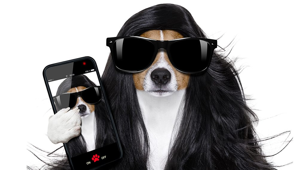 bad hair day dog ready to look beautiful at the wellness spa salon isolated on white background taking selfie with smartphone or tablet