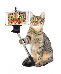 grey cat taking a selfie together with smartphone camera on a white background