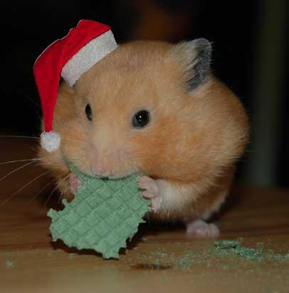 D_hamster