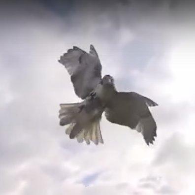animals-drones